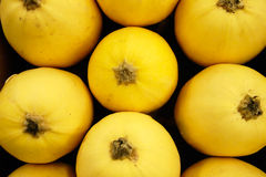 Squash. A bunch of yellow Squash Royalty Free Stock Photos