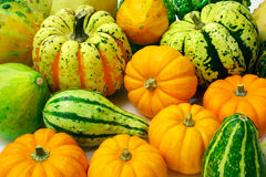 Squash Arrangement Royalty Free Stock Photo