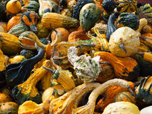 Squash Assortment Royalty Free Stock Photos