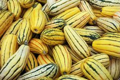 Squash background. Delicata - Also called Sweet Potato, Peanut squash, and Bohemian squash Royalty Free Stock Image