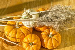 Squash Background. A Fall seasonal background for Halloween with small pumpkins and squash Royalty Free Stock Images