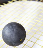 Squash ball. On a squash racket strings Stock Image