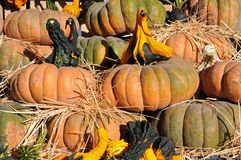 Squash and big pumpkin Stock Image