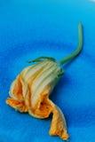 Squash Blossom Stock Photos