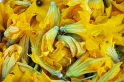 Squash Blossoms. Farm fresh organic yellow squash blossoms, good for salads or just battering and frying Royalty Free Stock Photo