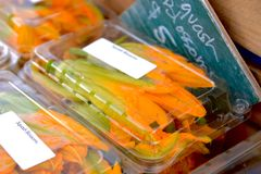 Squash Blossoms at an American Farmers Market Stand. Zucchini blossoms in plastic jewel pack container stock photo