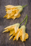 Squash blossoms or pumpkin flowers Royalty Free Stock Photos