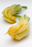 Squash blossoms or pumpkin flowers Royalty Free Stock Photo