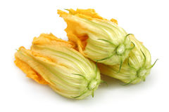 Squash Blossoms Royalty Free Stock Photography