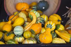 Squash in a bucket Royalty Free Stock Image