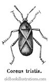 Squash Bug Royalty Free Stock Images