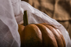 Squash with cheesecloth. Top part of orange squash with stem smooth segmented surface covered with white cheesecloth on burlap background, horizontal photo Stock Photo