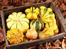 Decorative Squash, cucurbitaceous, pumpkin, on white background stock photography