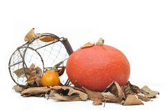 Squash on dead leaves Royalty Free Stock Photography