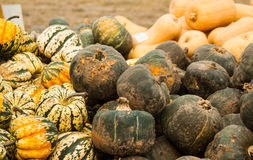 Squash at a farm stand Stock Images