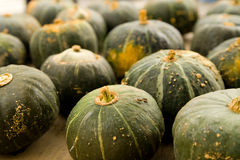 Squash at Farmer's Market Stock Images