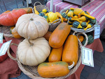 Squash at farmers market Royalty Free Stock Image