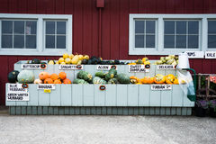 Squash at Farmers Market Stock Photos