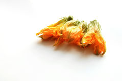 Squash flowers Royalty Free Stock Photography