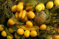 Squash & Fruit Bowl. Christmas center piece decoration of squash Stock Images