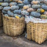 Squash fruits, Cucurbita sp., Family Cucurbitaceae, Central of T Stock Photo