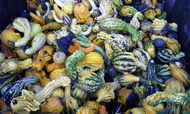 Squash Galore Royalty Free Stock Photography