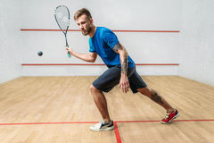 Squash game training, male player with racket. And ball, indoor court on background royalty free stock photo