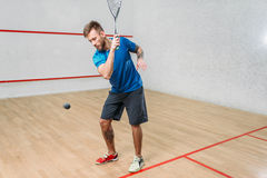 Squash game training, male player with racket. And ball, indoor court on background Royalty Free Stock Images