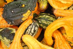Squash and gourds Stock Image