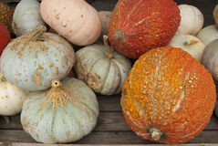 Squash and gourds. Piled on top of each other at a farmer's market Royalty Free Stock Photography