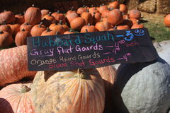 Squash and gourds Royalty Free Stock Images