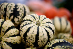 Squash with green and white strips. Royalty Free Stock Photo