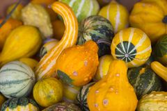Squash In A Bucket Royalty Free Stock Images