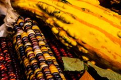 Squash and Indian Corn with leaves in a Fall still life. stock photography