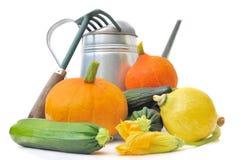 Squash och zucchini från trädgård Fotografering för Bildbyråer