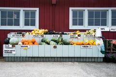 Squash på bondemarknaden Arkivfoton
