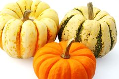 Squash and pumpkin. Just in time for fall Royalty Free Stock Image