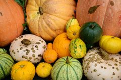 Squash and pumpkin Stock Photo