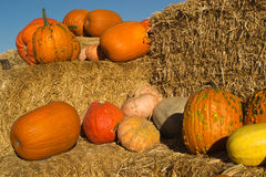 Squash, pumpkin and gourds harvest Stock Images