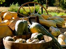 Squash at the pumpkin patch. With wagon wheel Royalty Free Stock Image