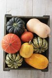 Squash pumpkin selection Stock Photography