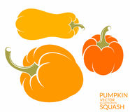 Squash. Pumpkin Stock Photography