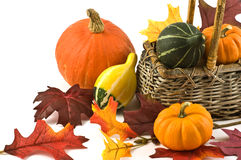 Squash and pumpkins. Colorful squash and mini pumpkins with fabric fall leaves for a harvest theme Royalty Free Stock Photo