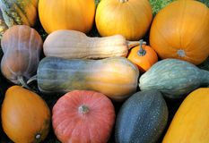 Squash and pumpkins Royalty Free Stock Image