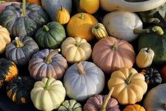Squash and pumpkins. Royalty Free Stock Photos