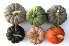 Squash and pumpkins. Stock Photos