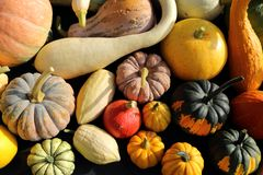 Squash and pumpkins. royalty free stock images