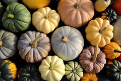 Squash and pumpkins. Stock Photography
