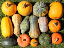 Squash and pumpkins. Royalty Free Stock Photos
