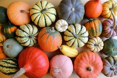Squash and pumpkins. Royalty Free Stock Photo
